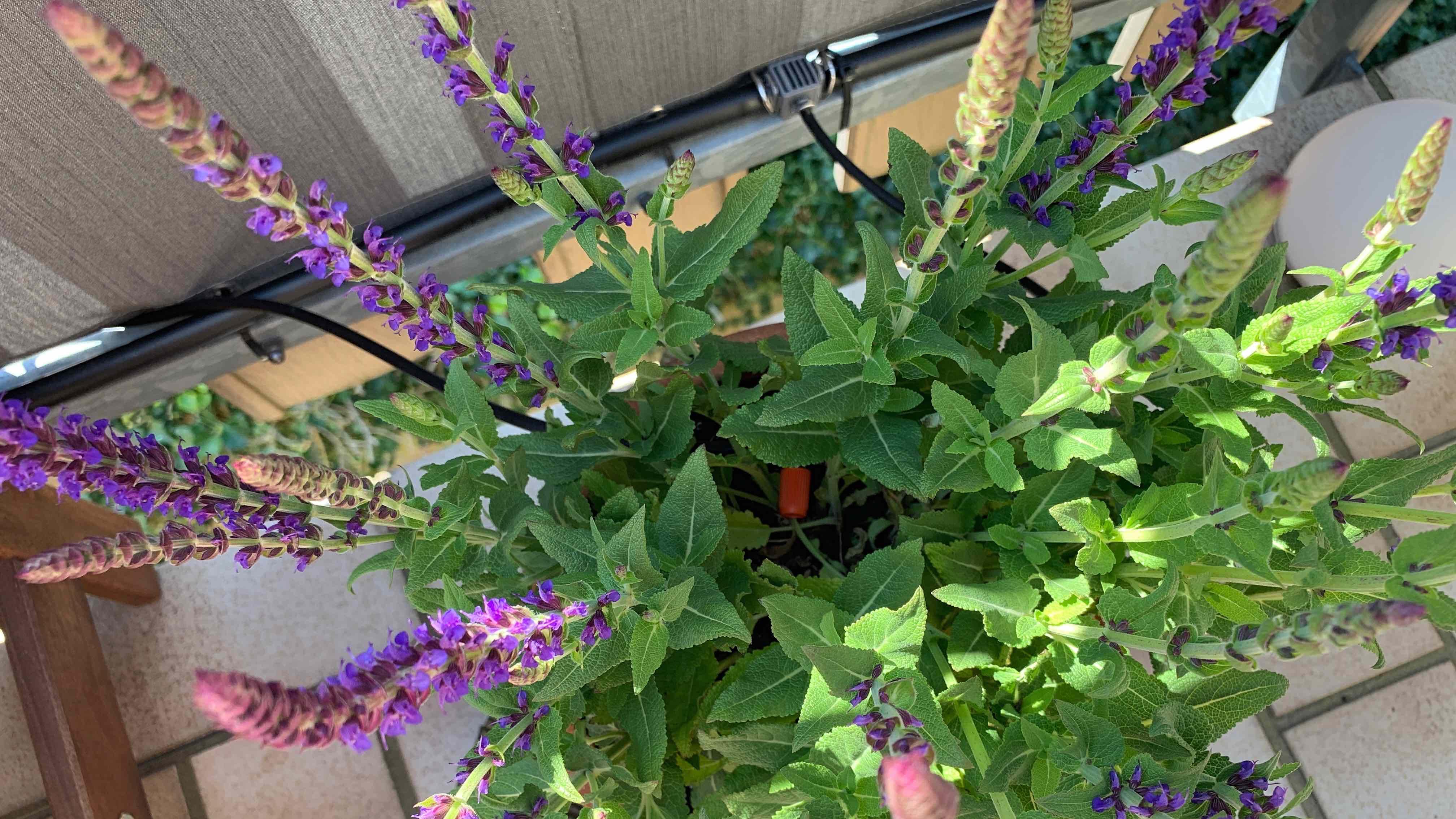 Eve_Aqua_HomeKit_Gardena_Terrasse_Balkon_Pflanzen_Bewässerung3 Wie HomeKit deine Pflanzen auf Balkon/Terrasse automatisiert bewässert