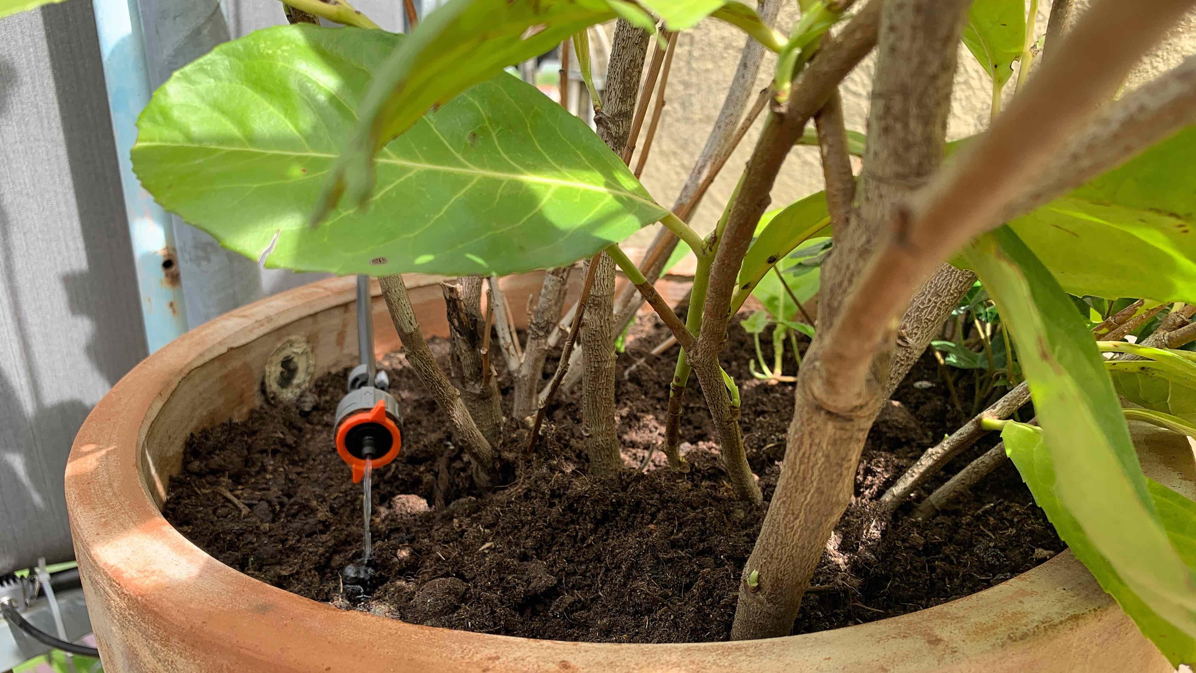 Eve_Aqua_HomeKit_Gardena_Terrasse_Balkon_Pflanzen_Bewässerung4 Wie HomeKit deine Pflanzen auf Balkon/Terrasse automatisiert bewässert