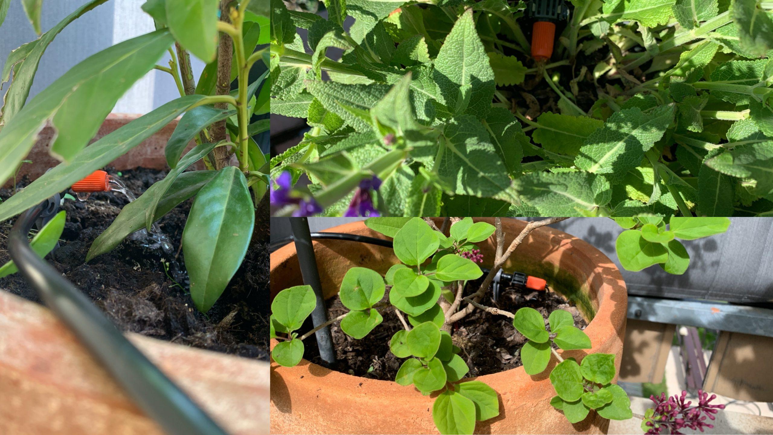 Pflanzen-auf-BalkonTerrasse-automatisiert-mit-Apple-HomeKit-bewässern1-scaled Pflanzen auf Balkon/Terrasse automatisiert mit Apple HomeKit bewässern